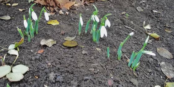 Hóvirágok - Amikor a bűnökről leolvad a hó...